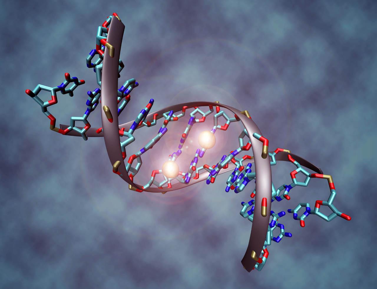 Post proyecto genoma humano este mes se celebran 10 a os for En 2003 se completo la secuenciacion del humano