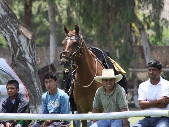 Diez cosas que se debe saber del caballo peruano de paso