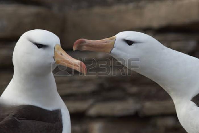 Post El Albatros Charles Baudelaire